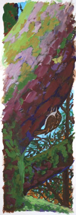 "Brown Creeper on White Pine,  gouache on paper, 28"" x 22.5"" fr."
